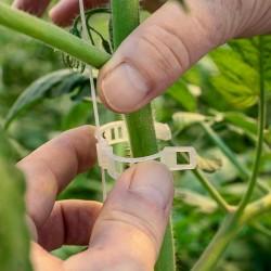 Κλιπ στήριξης καλλιέργειας τομάτας