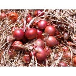 Κρεμμύδι κόκκινο ROSITA 250.000 σπόροι
