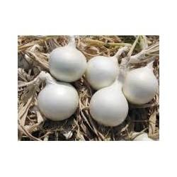 Κρεμμύδι λευκό ICEPEARL F1 10.000 σπόροι