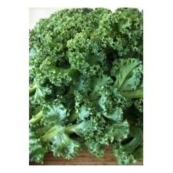 Λαχανίδα Kale STARBOR F1 2500 σπόροι