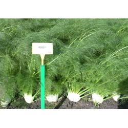 Φινόκιο  RONDO F1 2.500 σπόροι