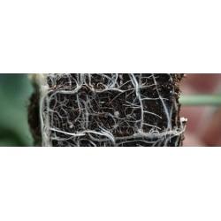 Υποκείμενα κολοκυθοειδών Topcare 1.000 σπόροι