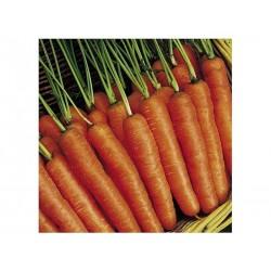 Καρότο Nantes 2  20 gr -Γεωπονική
