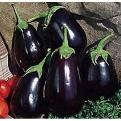 Μελιτζάνα Black Beauty 5 gr -Γεωπονική