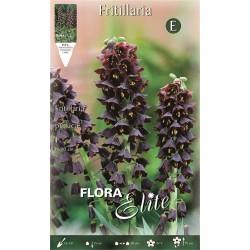 Βολβοί Φριτιλλάρια Persica adiyaman (Φάκελος 1τμχ) 459207-MaShop.gr