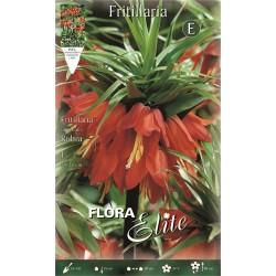 Βολβοί Φριτιλλάρια Rubra (Φάκελος 1τμχ) 456404- MaShop.gr