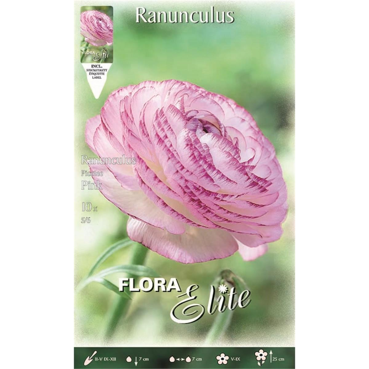Νεραγκούλα Picotee pink 792182 (φάκελος 10 βολβών)-MaShop.gr