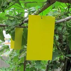 Χρωμοελκυστικές καρτέλες παγίδευσης εντόμων Testac