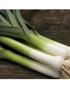 Αγορά Υβριδίων σπόρων Πράσου από το MaShop.gr