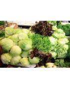 Αγορά Επαγγελματικών Σπόρων για Σαλάτες απο το MaShop.gr