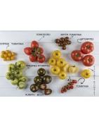 Αγορά επαγγελματικών σπόρων Ντομάτας από το MaShop.gr