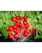 Αγορά σπόρου για Ραπανάκι απότο MaShop.gr