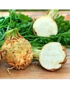 Αγορά σπόρων για Σελινόριζα από το MaShop.gr